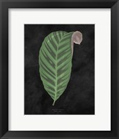 Framed Beautiful Leaved Plants I Black