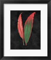 Framed Beautiful Leaved Plants II Black