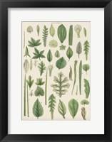 Framed Assortment of Leaves II
