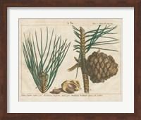 Framed Antique Botanical XXI