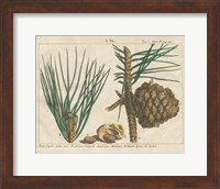 Framed Antique Botanical XXI