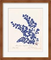 Framed Botanical Fern III Blue