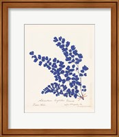 Framed Botanical Fern III Blue