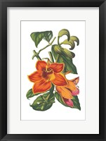 Framed Antique Botanical XVIII