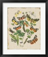 Framed Butterfly Bouquet IV Linen