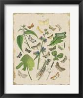 Framed Butterfly Bouquet III Linen