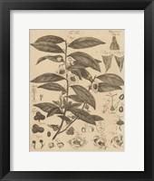 Framed Tea Tree