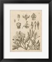 Framed Rhododendrons Vintage