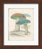 Framed Funghi Italiani Mushrooms