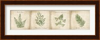 Framed Vintage Ferns - 4 Image Panel