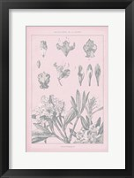 Framed Rose Quartz Rhododendron