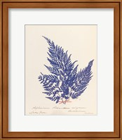 Framed Botanical Fern XVIII Blue