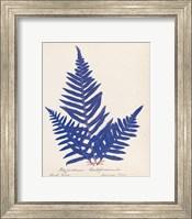 Framed Botanical Fern XI Blue