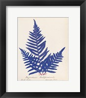 Framed Botanical Fern XI Blue