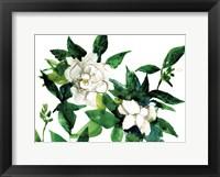 Framed Bright Gardenias