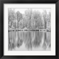 Framed Tree Reflections