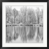 Framed Tree Reflections