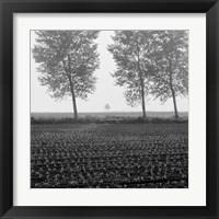 Framed Trees of Tuscany
