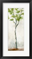 Framed Watercolor Birch Trees II