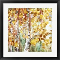 Framed Watercolor Fall Aspens Square
