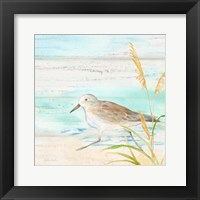 Framed Sandpiper Beach IV