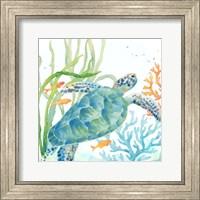 Framed Sea Life Serenade IV