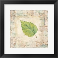 Framed Nature Walk Leaves IV
