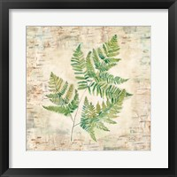 Framed Birch Bark Ferns I