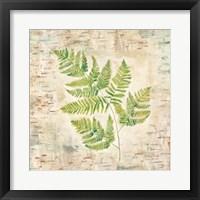 Framed Birch Bark Ferns II