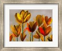 Framed Contemporary Poppies Yellow