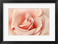 Framed Rosa
