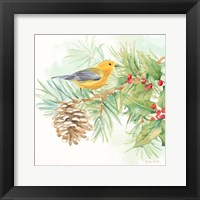 Framed Winter Birds I Warbler