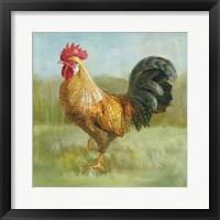 Framed Noble Rooster II