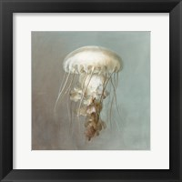 Framed Treasures from the Sea VI