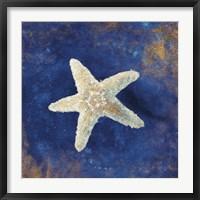 Framed Treasures from the Sea Indigo IV