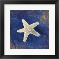 Framed Treasures from the Sea Indigo IV