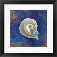 Treasures from the Sea Indigo III Framed Print