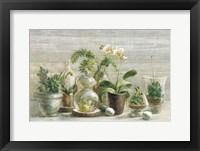 Framed Greenhouse Orchids on Wood v2