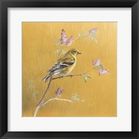 Framed Female Goldfinch on Gold