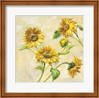 Framed Farm Nostalgia Sunflowers