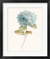 Framed Garden Hydrangea