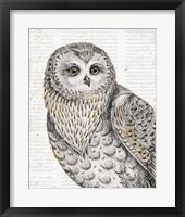 Framed Beautiful Owls IV