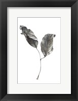 Framed Silver Leaf