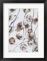 Framed Cotton I