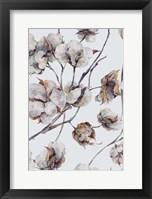 Framed Cotton II