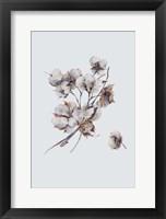 Framed Cotton III