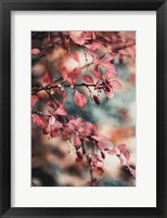 Framed Fall I