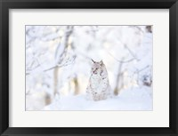 Framed Snow lynx