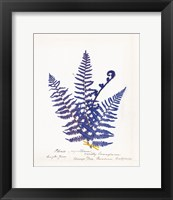 Framed Botanical Fern IV Blue Light