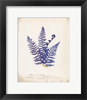 Botanical Fern IV Blue Framed Print